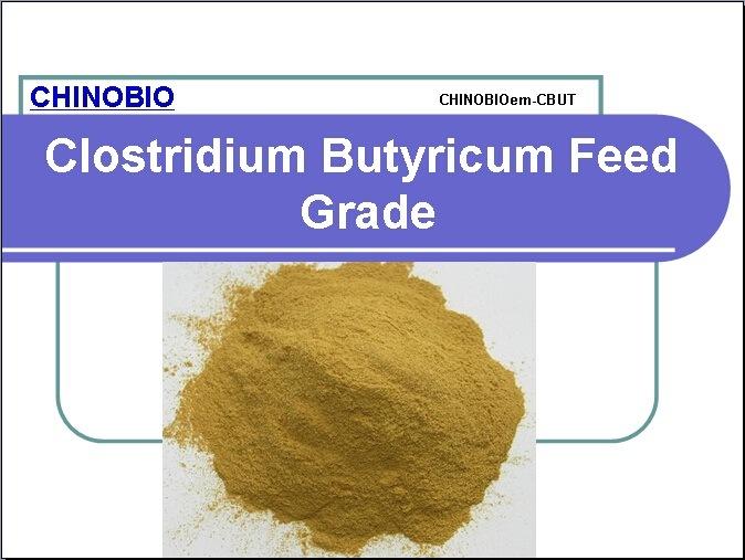 Clostridium Butyricum Feed Grade for Feed Additives