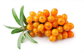Seabuckthorn Berry Oil Rich in Omega-7 for Nutrition Supplement