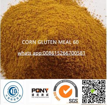 Non-GMO Corn Gluten for Animal Poultries