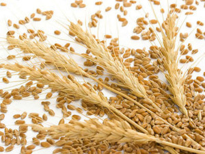 Sinochem Vital Wheat Gluten for Food Processing
