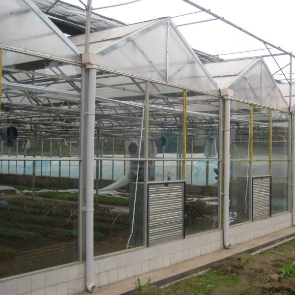 New Large European Style High Tech Glass Greenhouse