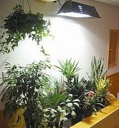 600W 2000k E39 HPS Horticultural Plant Grow Light 110V