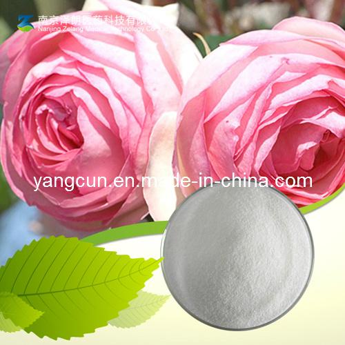 Paeonia Moutan SIM Extract Paeonol 99%