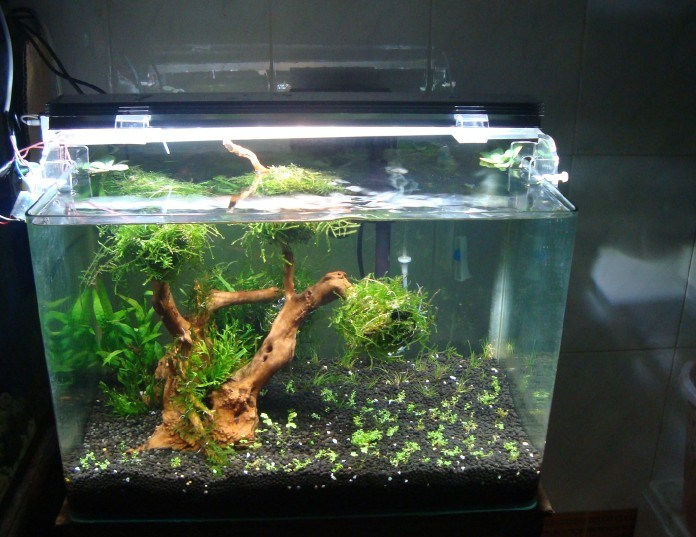 China Glass Aquarium - China Aquarium, Grass Tank