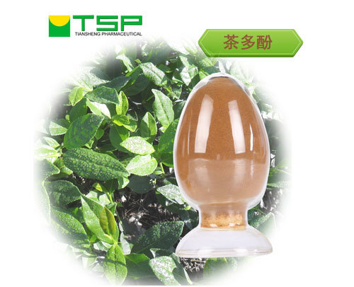 Weight Loss Beverage Green Tea Extract Tea Polyphenols 95% with GMP Certification