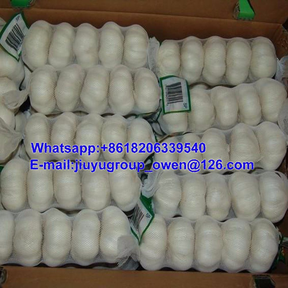 Jining New Crop Fresh Normal White Garlic