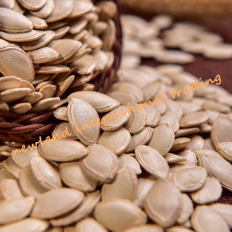 Top Quality Shine Skin Pumpkin Seeds with 10cm From Inner Mongolia for Cook