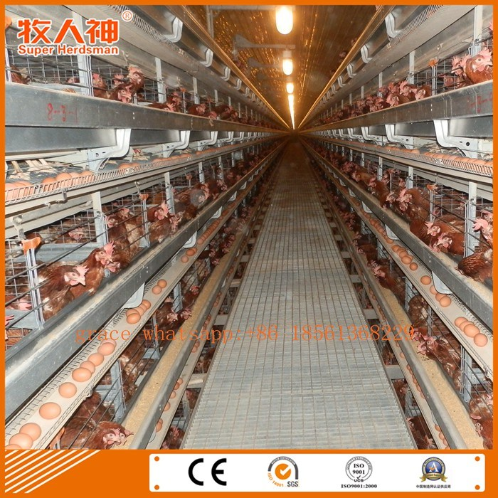 Automatic Layers Poultry Cages with Prefab Shed and Turn- Key Service