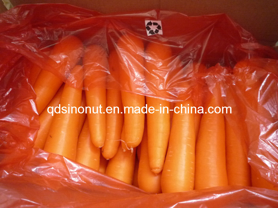 New Crop S/M/L Fresh Carrot