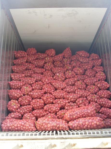 New Crop Laiwu Garlic