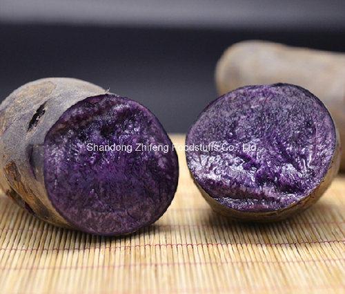 300g Organic Black Potato with Exporting Quality