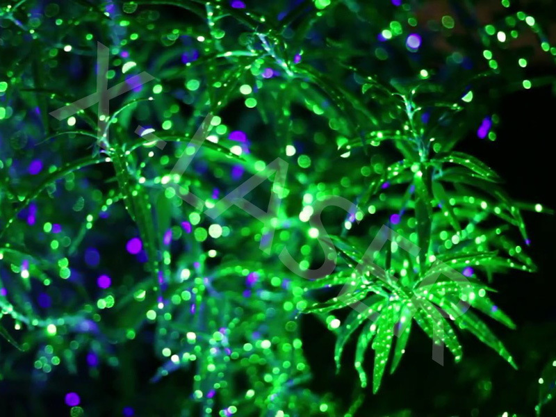 China Bliss Light Color Changing Outdoor Christmas Led