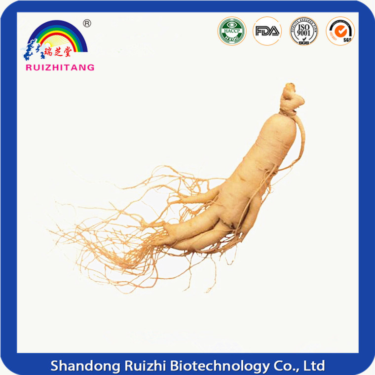 Herbal Extract Ginseng Extract for Health Suppliment