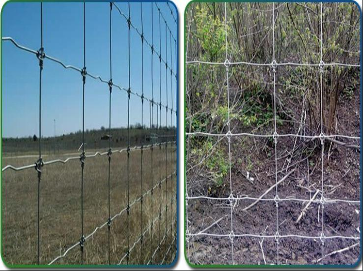 China Australia 4FT 5FT Galvanized Fixed Lock Deer Fence/Cattle ...
