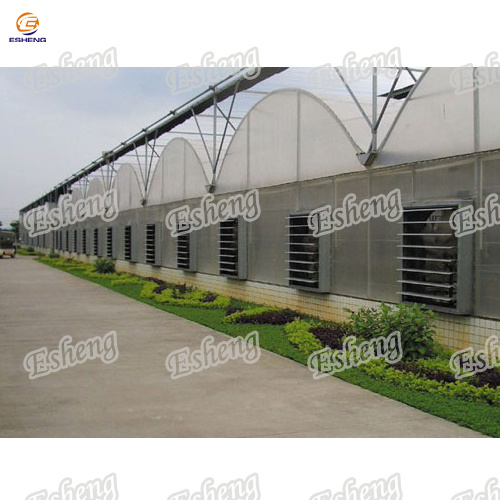 Greenhouse Exhaust Fan/Cooling Fan for Vietnam Market