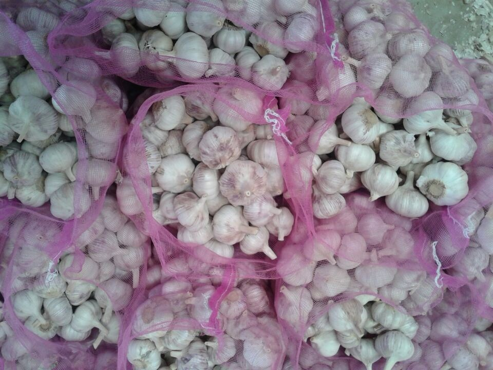 New Crop Laiwu Garlic
