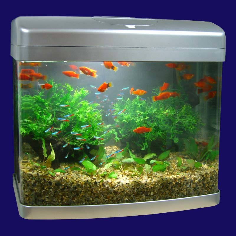 China Aquarium Tank Aquakid China Tank Aquarium Tank