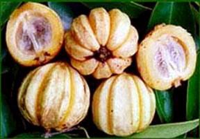 Garcinia Cambogia Extract - China Garcinia Cambogia