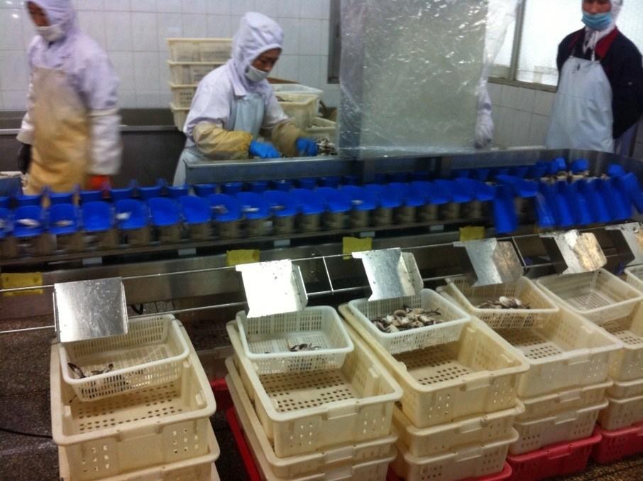Food Poultry Prawn Weight Sorter Grading Machine