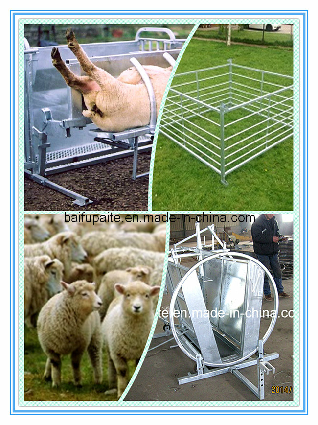 Sheep Crates
