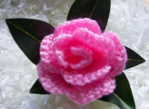China Knitting Rose (5) - China Knitting Rose