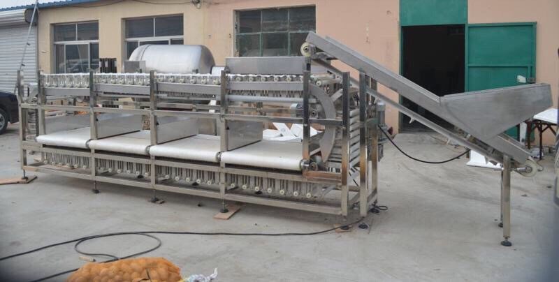 Potato Sorting Machine Fruit Grader Machine Carrot Sorter Machine