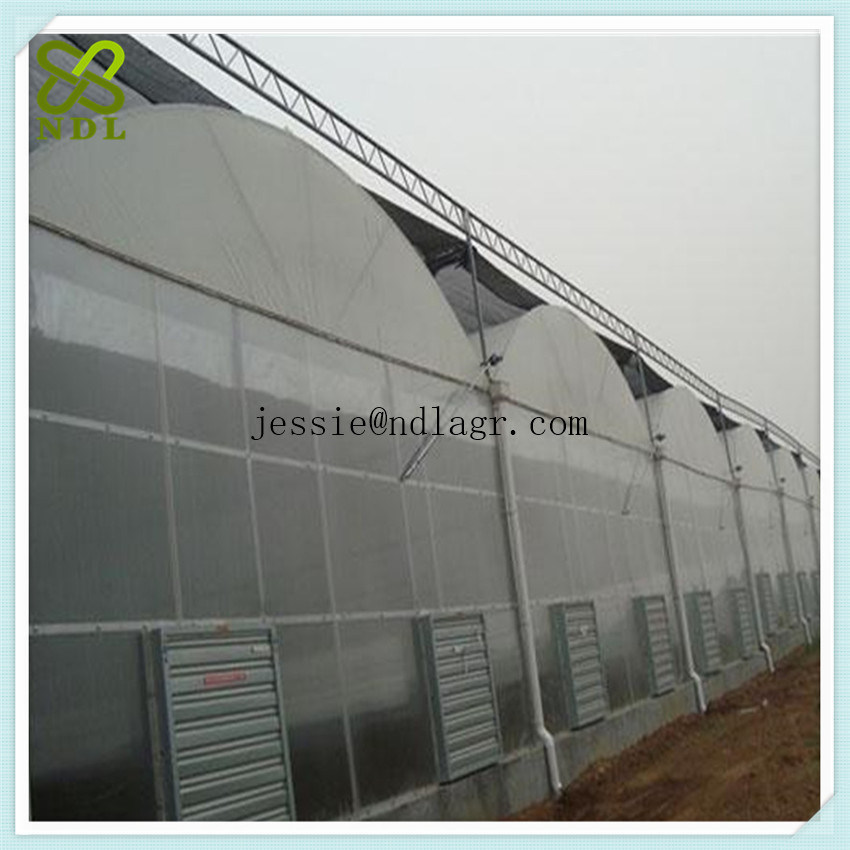Single Span Film Greenhouse for Growing Cucumber