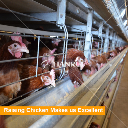 Tianrui Hot Selling H Type Automatic Battery Layer Poultry Cage