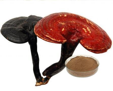 Reishi Extract /Ganoderma Lucidum Extract