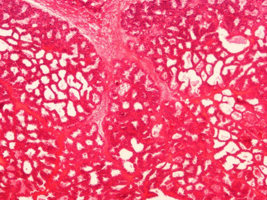 Animal Histology Prepared Microscope Slides