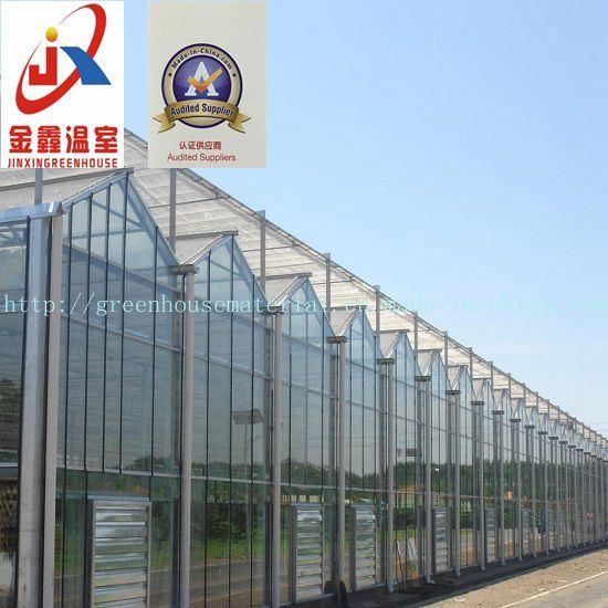 Multi-Span Venlo Type Glass Greenhouse