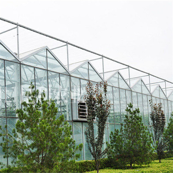 Venlo Greenhouse / Venlo Type Glass Greenhouse / Glass Greenhouse