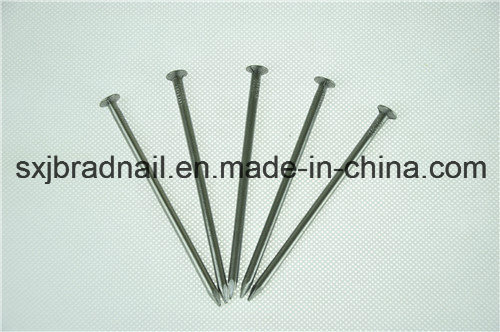 Common Round Wire Nails (factory/supplier)