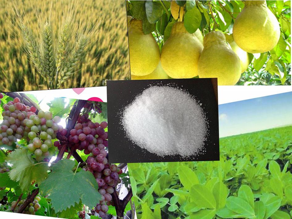 99% Mono Potassium Phosphate, MKP