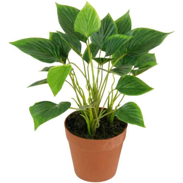 Artificial Plants of Bonsai