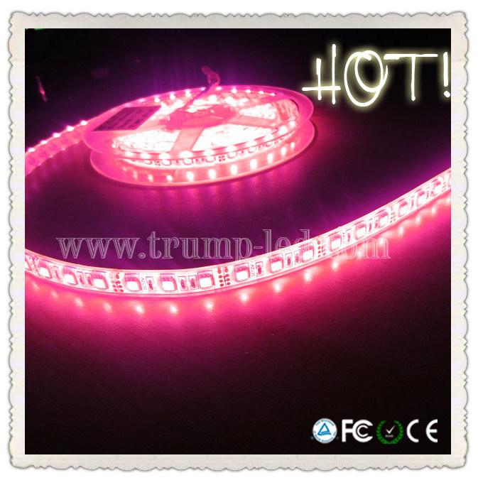 china outdoor 5050 12 volt multi color flexibel soft led rope light