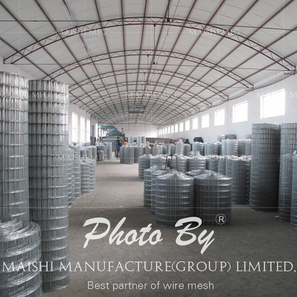 Factory Sales Welded Wire Mesh
