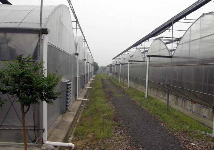 Multi-Span Galvanized Steel Structure Greenhouse