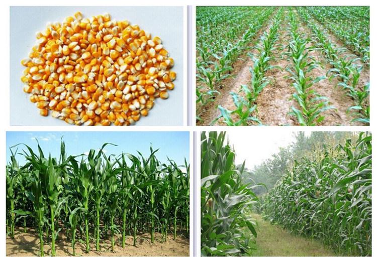 Garden Hand Push Manual Corn Seeder/Planter with Fertilizer