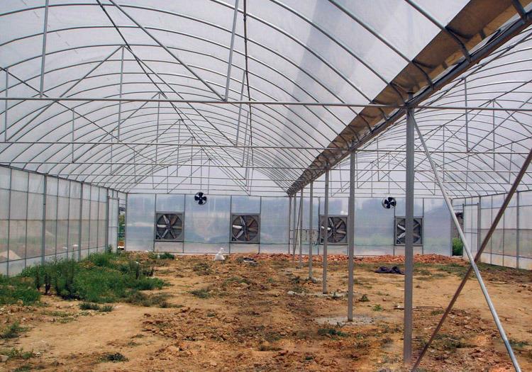 Multi-Span Tunnel Galvanized Steel Structure Greenhouse