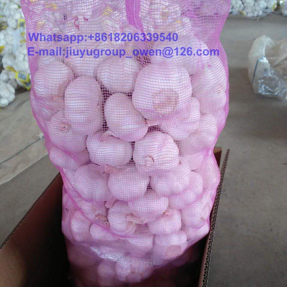 Jining New Crop Fresh Normal White Garlic