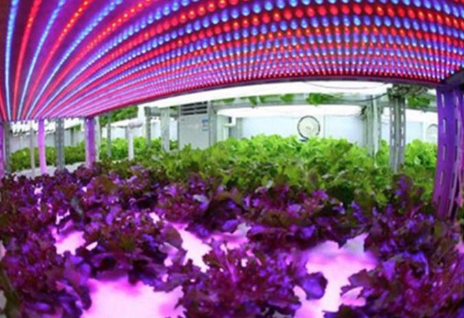 22W 1.2m Integrated LED Grow Tube Light