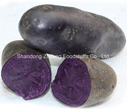 300g Organic Black Potato with Exporting Quality