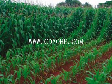 Chengdu EDDHA-Fe Manufacturer