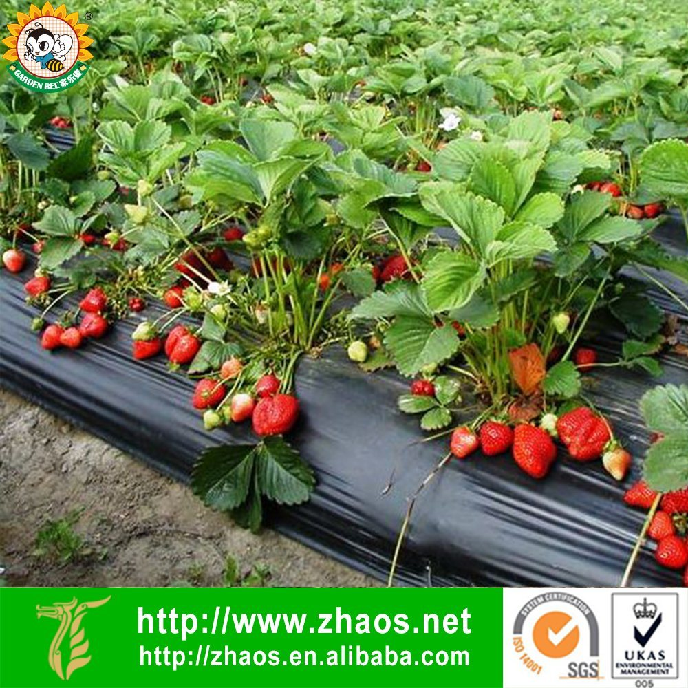 Direct Manufacturer PE Black Agriculture Mulch Film with UV Resistant