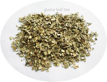 Th d 39 herbe de feuille de goyave bt3013 th d 39 herbe de feuille de goyave bt3013 fournis par - Feuille de goyave acheter ...
