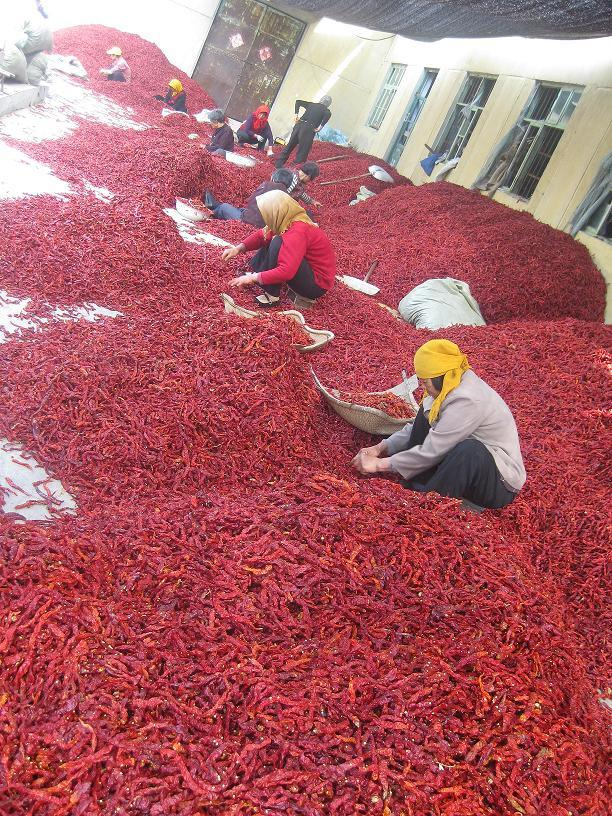 Dry Xian/String Chilli in China