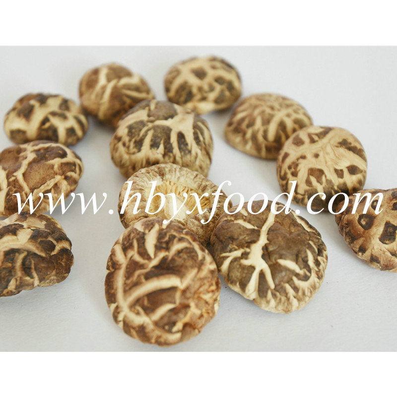 Delicious Healthy Food Dried Mushroom Manufacturing Base in Hubei