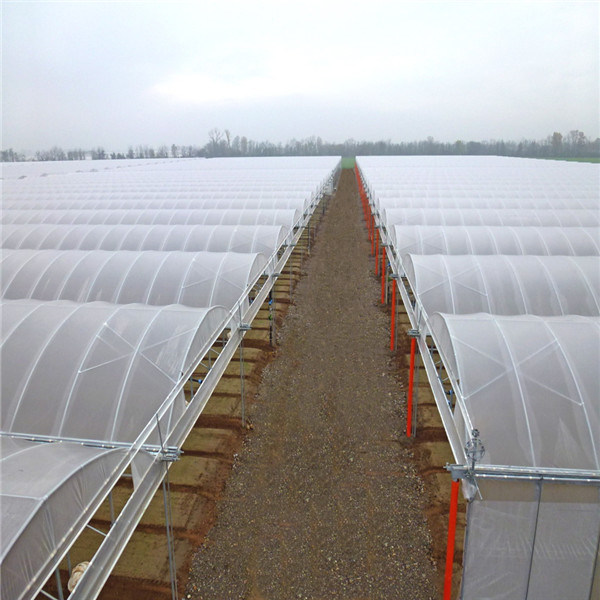 Poultry House and Greenhouse with Ventilation Windows and Cooling Pad System to Adjust Temperture -Helen