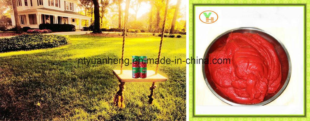 Tomato Paste China for USA Market